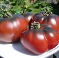 100 seeds Heirloom Giant Black Krim Tomato Hybrid F2 Vegetables sweet fruits