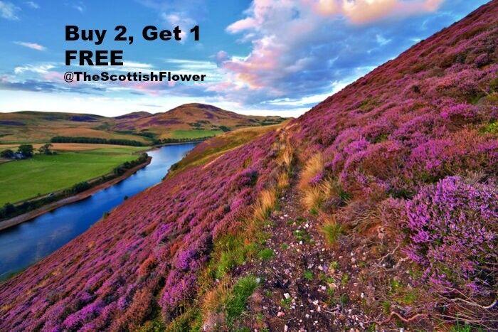 The Scottish Flower