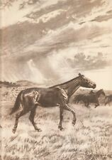 "Prehistoric NEBRASKA Horse: MERYCHIPPUS Sepia Print Z Burian 1963 VF 9x13"""