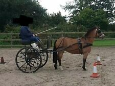 2 Wheel Pony / Horse Carriage, Cart, Gig, Private driving and Shafts 13-14 hh