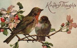 Vintage Postcard 1910's Kindest Thoughts Greeting Two Birds on a Limb