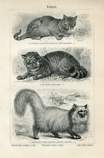 1895 Angora Cat Egyptian Cat Wild Cat Antique Engraving Print