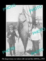 OLD 6 X 4 HISTORICAL GAME FISHING PHOTO OF WORLD RECORD TUNA CATCH c1913