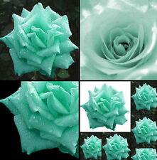 FD4207 ButterflyLove Green Rose Seed Mint Garden Flower Rare Plant Seed 100PCs