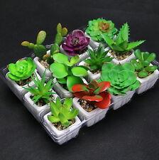 12 Artificiale Piante Sintetiche Giardino Pietra Semprevivo Vaso In Ceramica