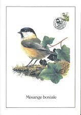 FDC 2695 - Oiseau Buzin sur gravure format A4 !
