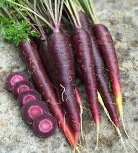 Carrot (PURPLE SUN F1) 100+ seeds :) SWEET. Instructions Inc. Free Postage Aus x