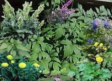 Ginseng Medicinal Plants Herbs CDROM 20 Books Flora Medical Wild Harvesting