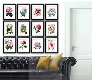 Pink Peonies hydrangea flower botanical illustrations set of 12 wall Hanging