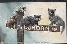 Animals Postcard - Kittens Sitting on Sign To London  MB2576