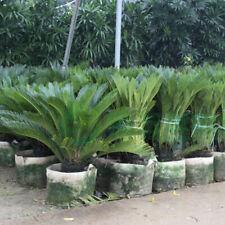 Nursery Pots Planting Bags Fabrics Seedling-Raising Pouch Garden Supplies