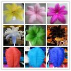 Wholesale! 5-100 pcs ostrich feathers (6-24 inch / 15-60 cm) 12 colors