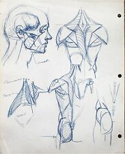 Harry Carmean drawing anatomy study of the head and torso blue pen