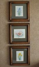 Set of 3 Original Watercolour Paintings