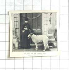 1902 The Queen And Her Favourite Dogs