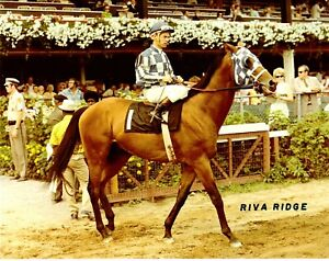 """1972 - RIVA RIDGE coming on the track for the Belmont Stakes - 10"""" x 8"""""""