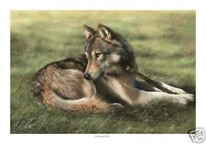 'Chewing It Over' Limited Edition Print, Wolf print
