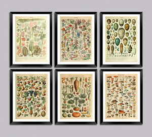 ADOLPHE MILLOT POSTERS: Flowers, Leaves, Fruit, Vegetable, Eggs, Nature Prints