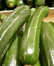♫ COURGETTE Verte Maraichère -Cucurbita pepo ♫ Graines ♫ Plt Potagère Gustative