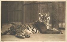 Postcard Tiger in Cage At Zoo Posted 1934