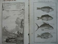 1749 - VOYAGES PREVOST - SIERRA LEONE 2 small engravings FISHES