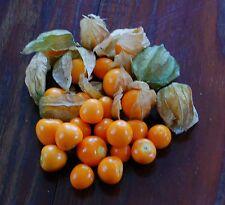 60 Samen  Echte Andenbeere Physalis Kapstachelbeere Inkapflaume mehrjährig