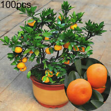 100Pcs Orange Tree Seeds Delicious Fruit Bonsai Garden Home Decor Dwarf Plant