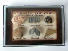 Fossils of The World Mini Collection. Boxed Set Of 6 Fossils