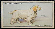 CLUMBER SPANIEL   Original Vintage  Coloured Card  VGC