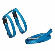 Marshall Ferret Harness and Lead Royal Blue
