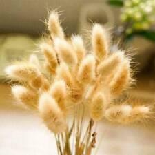 20PCS Natural Dried Flowers Bouquet Rabbit Tail Grass Bunch Home Wedding Decor