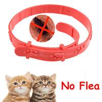Protection Cat Neck Strap Anti Flea Mite Acari Tick Remedy Pet Collar