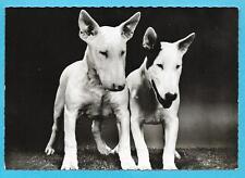 Publicité Pharma GENOLINE 1961 : CHIEN BULL TERRIER + Carte postale N° 26 C
