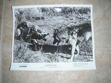 The Legend of Lobo Disney Wolf B&W 8x10 Promo Photo Original Lobby 1962 #3