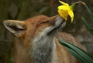 foxandsoul