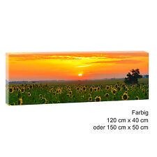 Panorama Leinwand Bild Natur Wald Landschaft  XXL 120 cm* 40 cm Sonnenblumen 507