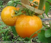 🔥 🍅 Amana orange Tomate 10 Samen historische Fleisch-Tomaten Sorte Geschenk