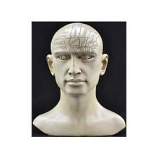 "8"" Phrenology Head Scientific Psychology Bust Medical Science Statue Figurine"