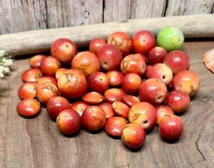 LOT OF 43 RED & GREEN CRAB APPLE BEADS & SPACERS! Very Realistic Looking!!!