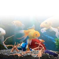 Natürliche Baumstamm-Treibholz-Aquarium-Betriebsholz-Dekoration