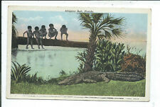 Postcard Black Americana Alligator Florida