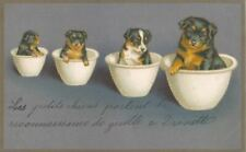 Vintage Rare Dog Postcard Miniature Pinscher Puppies France 1906