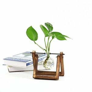 Plants Terrarum Glass Bulb Vase Wth Retro Sold Wooden Stand And Metal Swvel Hold