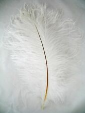 White Ostrich Feathers 12-16 inch long per each