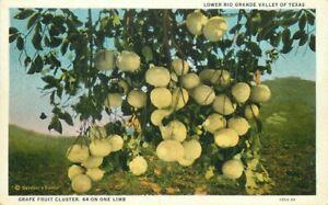 Barron Teich Farm Agriculture 1920s Grape Fruit Cluster Texas Postcard 21-2081