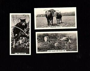 3-1934 Nicolas Sarony Tobacco Cards Life At Whipsnade Zoo #'s 25,26 & 27