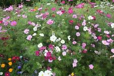 FLOWER SEED MIXTURE - FANTASTIC VALUE! - 1 PACK COVERS UP TO 400 SQ METRES!!