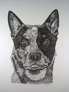 Australian Cattle Dog Queensland Heeler  Orig. VTG Pen & Ink Drawing Head Study