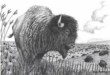 Scott Patton Art American Bison Buffalo Wildlife Western Pencil Ltd Litho Print
