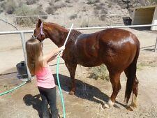 Horse Wash Wand Deep Cleaning Bath Washer Sprayer Rinse UV Protected Water Rake